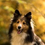 メテニー夫婦の愛犬オリーを襲った病「ダニ麻痺症」とは?原因不明の衰弱から奇跡の復活で結末は?【アンビリバボー】