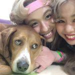 ぺこ&りゅうちぇるの保護犬サリーとの物語。保護犬の実態とは?【天才!志村どうぶつ園】