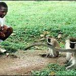 ウガンダでサバンナ(ベルベット)モンキーに育てられた少年ジョン(John)!現在は?